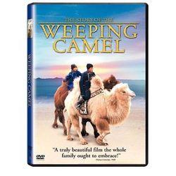 Weeping_camel