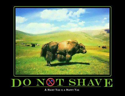 Yak_shave